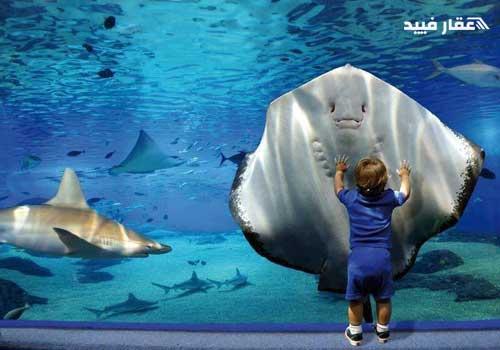 متحف الغردقة المائي